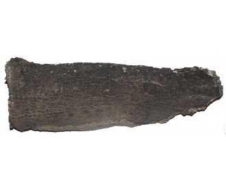 plaque de liège femelle
