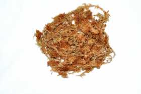 New Zealand sphagnum moss AAA