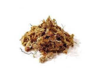 Chili sphagnum moss 0.5 Kg dose