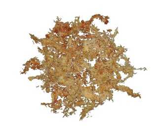Long fiber chili sphagnum moss dose of 0.5 Kg
