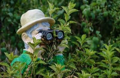 Recherche de plantes